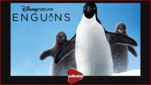 دانلود مستند پنگوئن ها: زندگی بر لبه تیغ