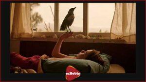 دانلود رایگان فیلم سینمایی پنگوئن بلوم
