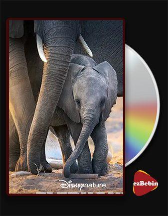 دانلود مستند فیل با دوبله فارسی مستند Elephant 2020 با لینک مستقیم