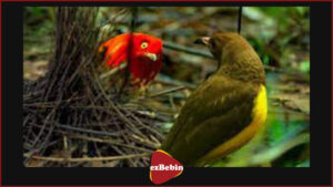 دانلود رایگان مستند سینمایی رقص با پرندگان
