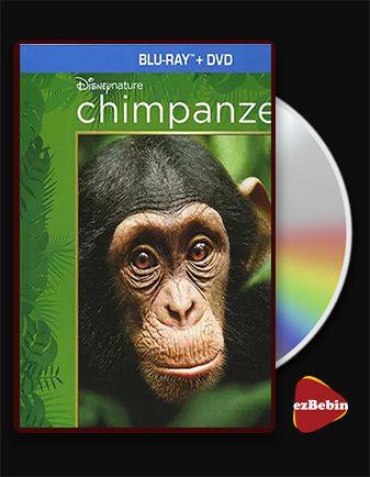 دانلود مستند شامپانزه با دوبله فارسی مستند Chimpanzee 2012 با لینک مستقیم