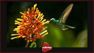 مستند سانسور نشده Wings of Life 2011