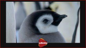 مستند سانسور نشده March of the Penguins 2005