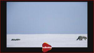 دانلود رایگان مستند سینمایی افسانه قطب شمال