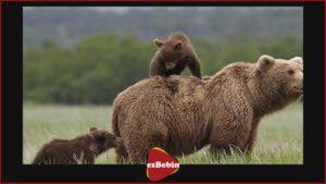 دانلود رایگان مستند سینمایی خرس ها