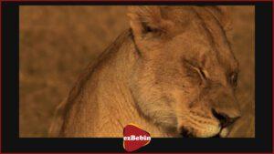 مستند سانسور نشده The Last Lions 2011