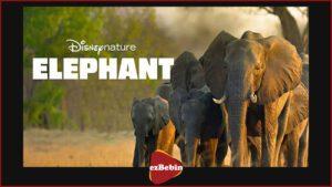 دانلود رایگان مستند سینمایی فیل