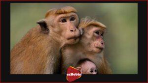 دانلود رایگان مستند سینمایی قلمرو میمون ها
