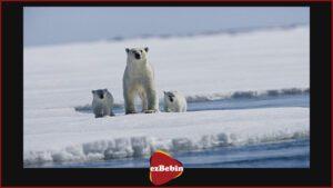 مستند سانسور نشده Arctic Tale 2007