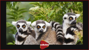دانلود رایگان مستند سینمایی جزیره لیمورها: ماداگاسکار