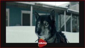 دانلود رایگان فیلم توگو با دوبله فارسی