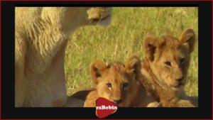 دانلود رایگان مستند سینمایی آخرین شیرها