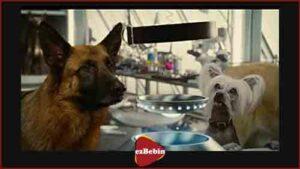 دانلود رایگان فیلم سینمایی گربه ها و سگ ها 2