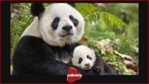 دانلود رایگان مستند سینمایی متولد چین