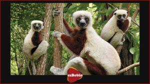 مستند سانسور نشده Island of Lemurs: Madagascar 2014